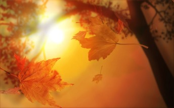 autumn-leaves-light